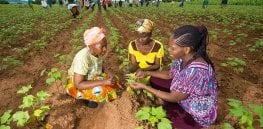 GMOs in South Africa: Benefits of biotech crops changing women farmers' minds