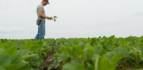 dicamba-waiting-game-17917b1d