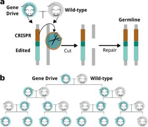 gene drive 12 12 17 3.jpg