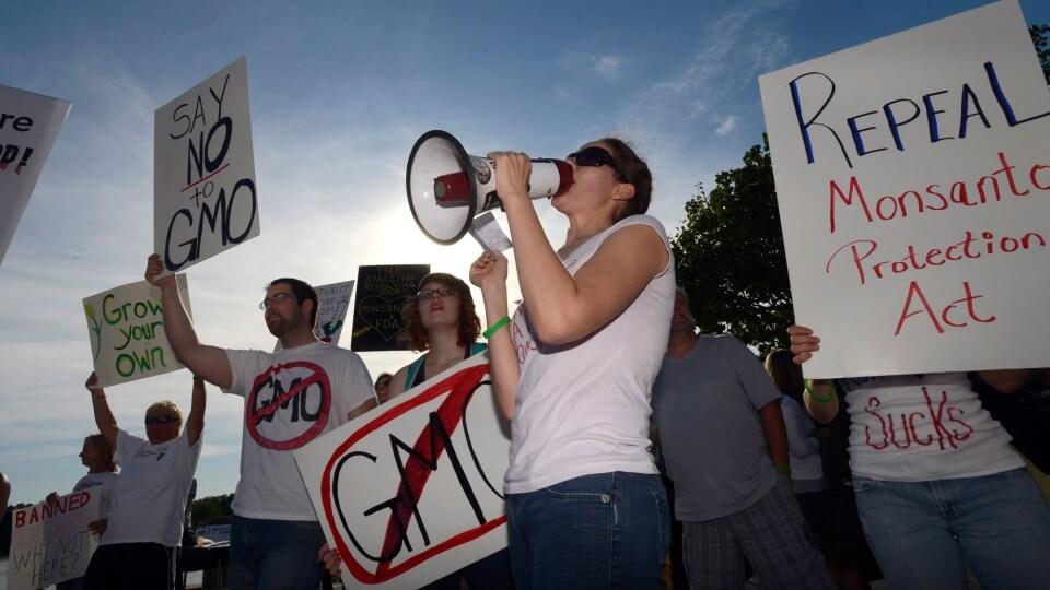 Afraid of public backlash, skittish investors keep promising GMO crops off the market