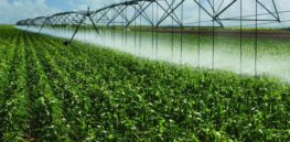 Drought-resistant plant genes could lead to crops that need less water