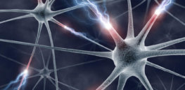Neuron by neuron: We often examine the brain too closely to see the big picture