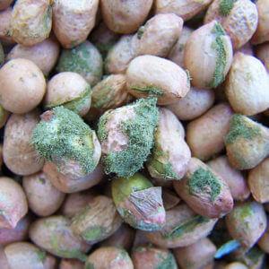 peanuts x