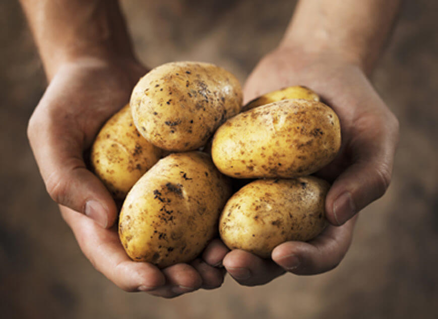potatoes in hand e