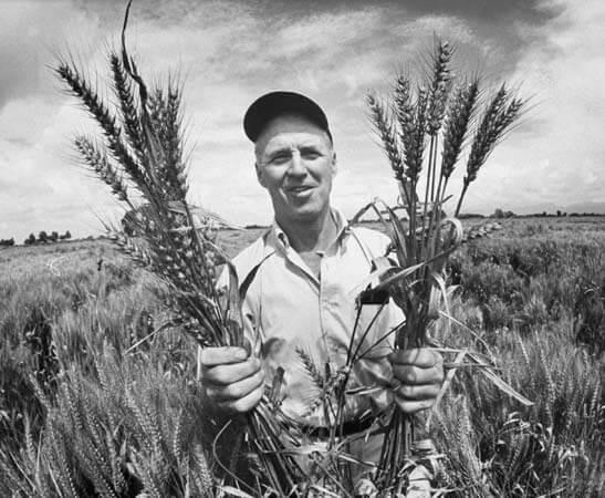 Podcast: Norman Borlaug a hero? Spread coronavirus for herd immunity? CRISPR v. agroecology