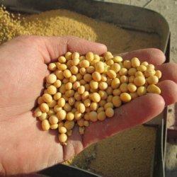 illinois soybean high yield value