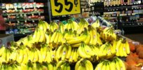 Can biotechnology defuse the looming 'bananapocalypse'?