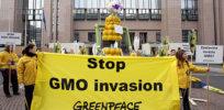 Greenpeace GMO protest 8447