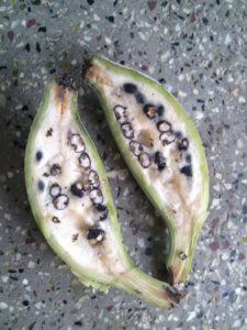 Banana with Seeds