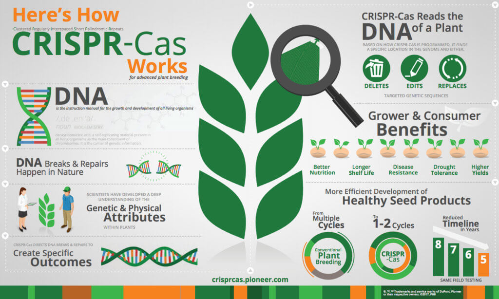 CRISPR Cas infographic