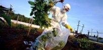 Greenpeace GMO 432