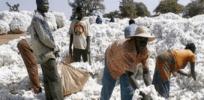 Burkina Faso cotton farmers 238943