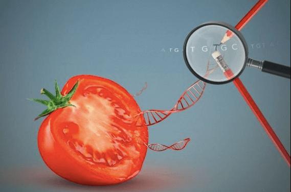 CRISPR food gene editing 9547435