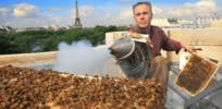 urban beekeeping 855834