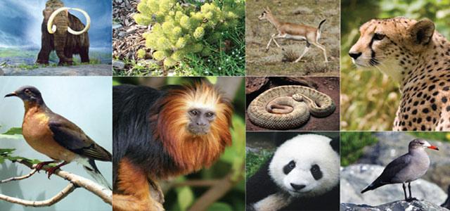 biodiversity 1 19 18 2
