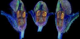 plant imaging genetics 74748