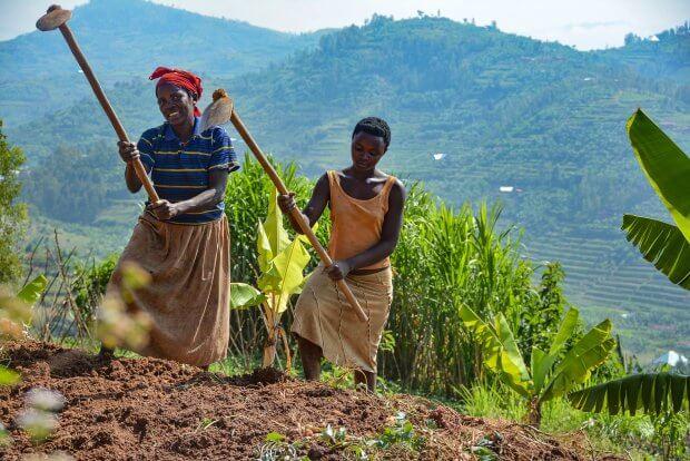 rwanda GMO 3247823478
