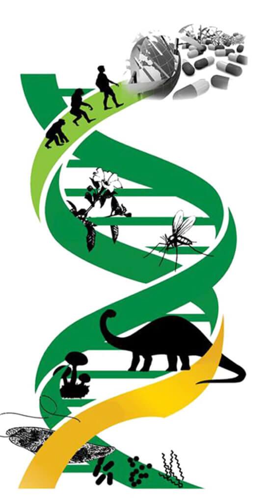gene editing 1 3 18
