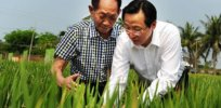 US—but not China—approves GMO rice developed by Chinese scientists