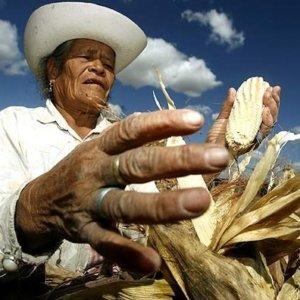 maiz mexico