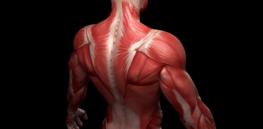 muscle jpg