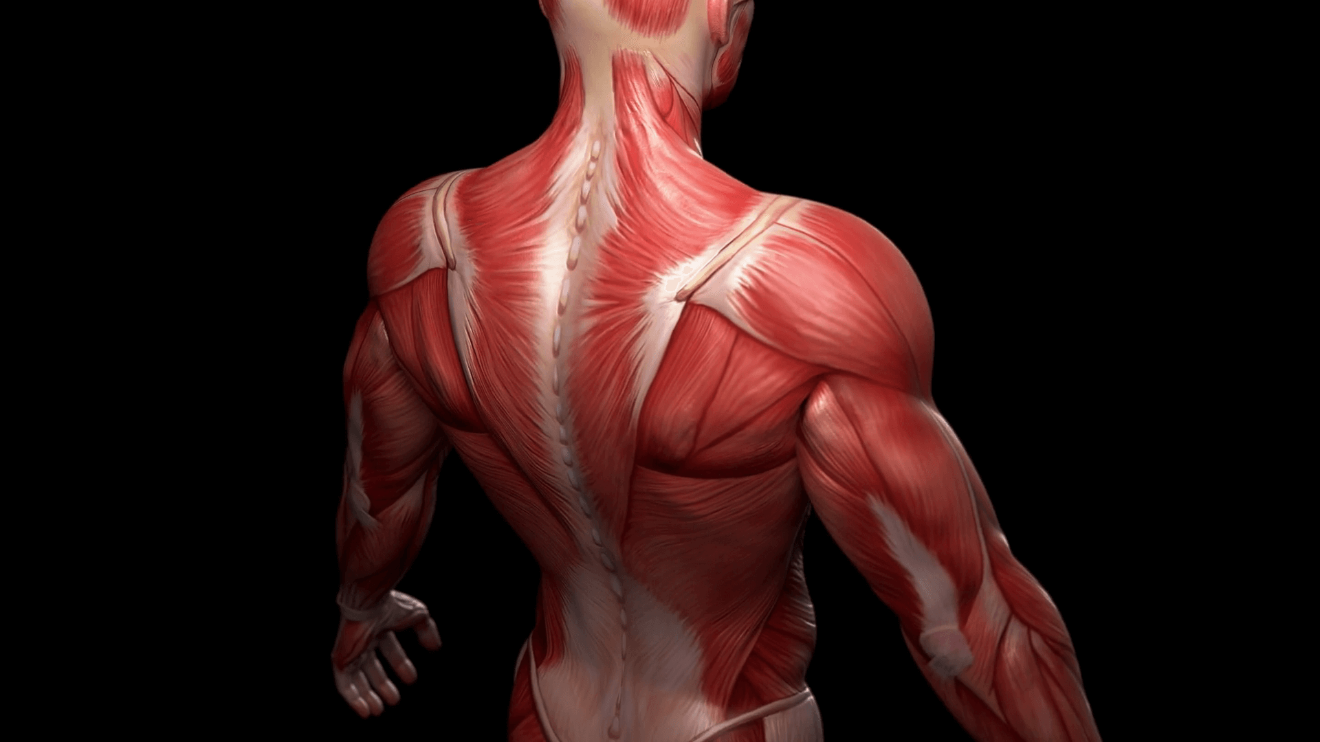 Human muscles from stem cells: Advance could aid research ...