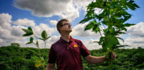 Herbicide-resistant 'super weeds'? Don't blame GMO crops, study says