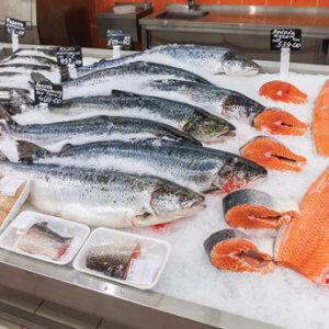 genetically engineered salmon 85448