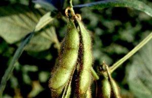 seeds 1 3 18 3