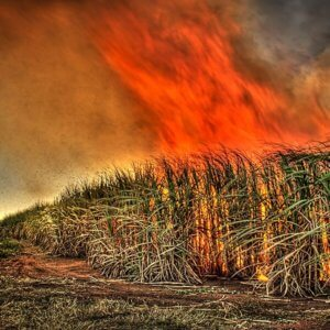 sugar cane burn flickr gavin fordham