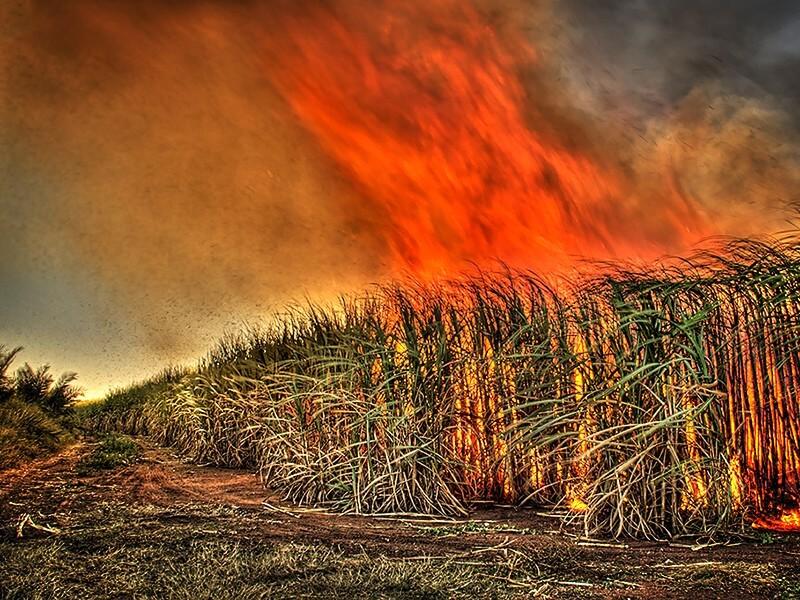sugar cane burn flickr gavin fordham