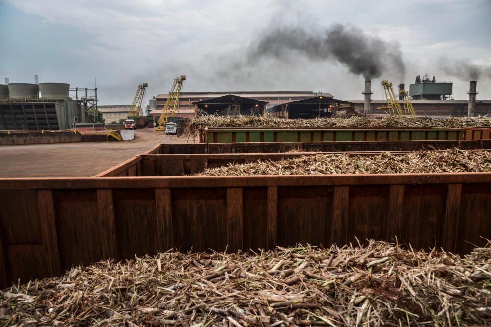 Sugarcane 1 23 18 2