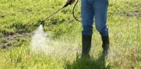 Judge delays glyphosate lawsuit after study of 45,000 people finds no link to cancer