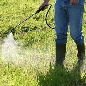 weed herbicide spraying