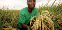 Ghanaian scientist: GMO food safer, more sustainable than conventional crops