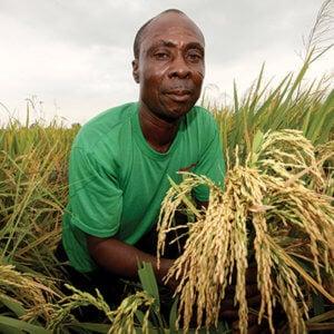 Ghana farmer 5437