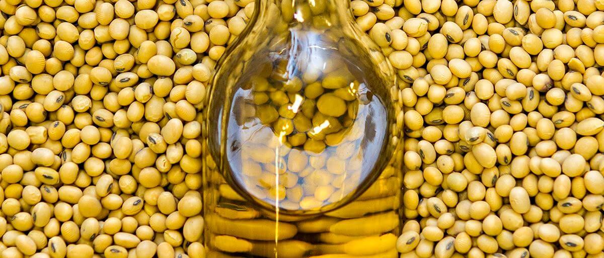 GMO soybean oi 8437237