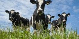 cows in pasture xlarge trans NvBQzQNjv BqyKbbTIvVbvqvypOgwykjr ErJ ZKVUu qh K BqSLks e
