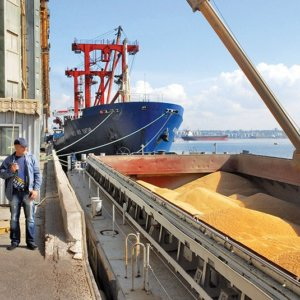 US China GMO corn trade 33828