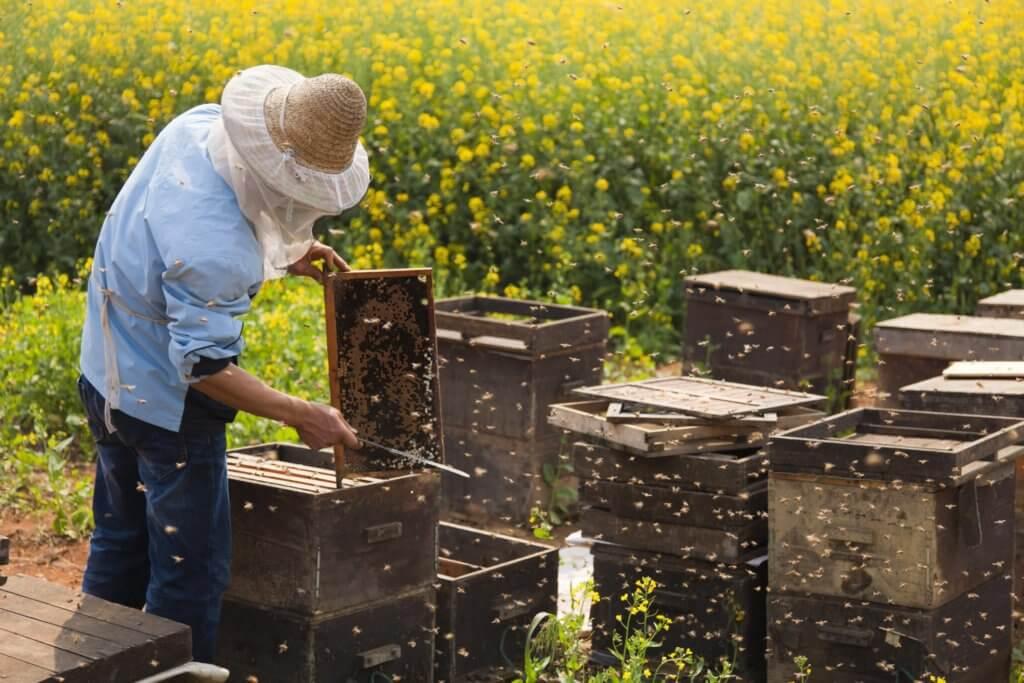 Beekeeper 382