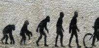 2-12-2018 evolutionjpg