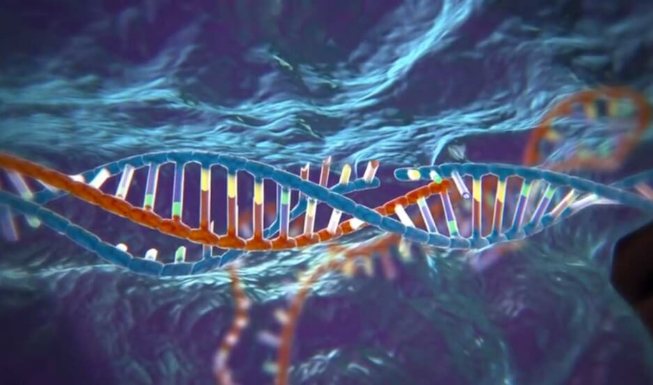 the controversy surrounding genetic engineering Genetic engineering it is necessary to understand both the benefits and harmful effects of altering the genetic despite all that controversy surrounding.