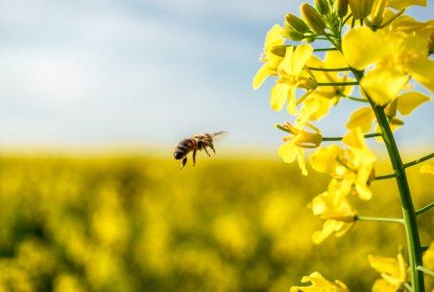 neonicotinoids bees 327399