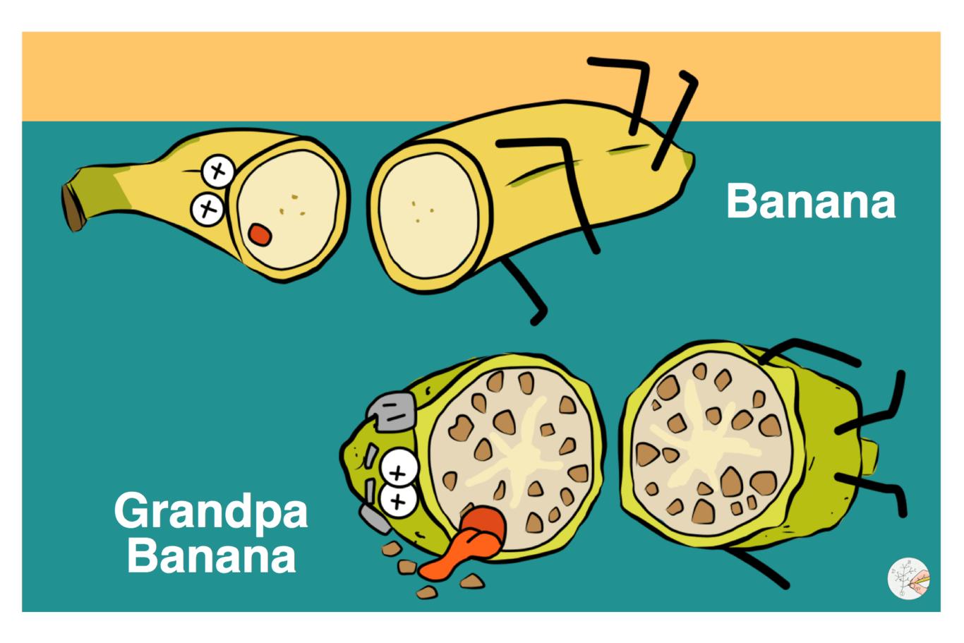 Banana grandpa