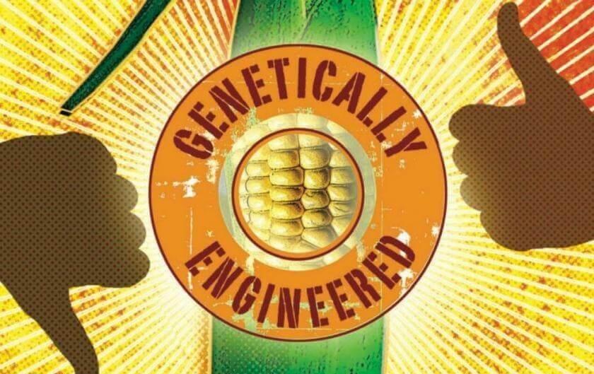 GMOs e
