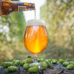 beer hops GMO yeast 8437538