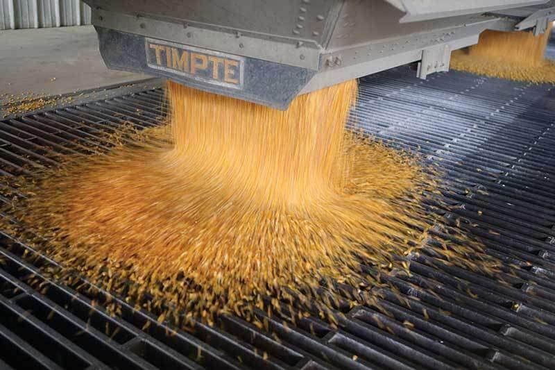 corn 3828