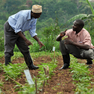 Africa crop science 3427723