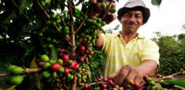 Pic by Neil Palmer CIAT A coffee farm worker in Cauca southwestern Colombia