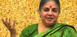 Vandana Shiva on Rice Background